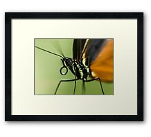 A close up of a butterfly Framed Print
