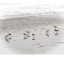 Sandpipers on the Beach  Photographic Print