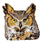Great Horned Owl by Dave  Knowles