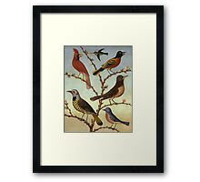 Thomas Coke Ruckle - Birds. Bird painting: cute fowl, fly, wings, lucky, pets, wild life, animal, birds, little small, bird, nature Framed Print