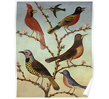 Thomas Coke Ruckle - Birds. Bird painting: cute fowl, fly, wings, lucky, pets, wild life, animal, birds, little small, bird, nature Poster