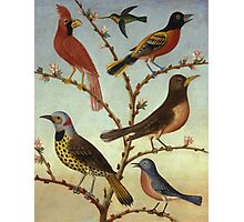 Thomas Coke Ruckle - Birds. Bird painting: cute fowl, fly, wings, lucky, pets, wild life, animal, birds, little small, bird, nature Photographic Print