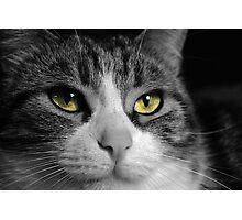 sissi the cat Photographic Print