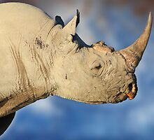 Black Rhino - Rare and Endangered Beauty from Wild Africa by LivingWild