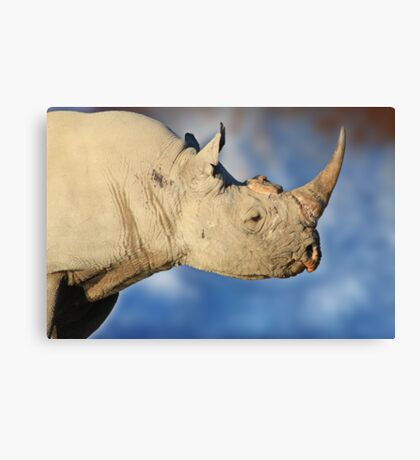 Black Rhino - Rare and Endangered Beauty from Wild Africa Canvas Print