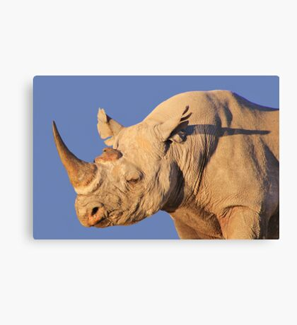 Black Rhino - Rare and Endangered Power from Wild Africa Canvas Print