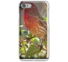 House Finch (Male) Feeding iPhone Case/Skin
