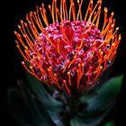 Fantasy Flower by Heather Friedman