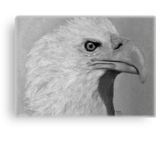 Grey Eagle Canvas Print