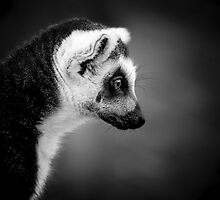 Lingering Lemur by Brian Dukes