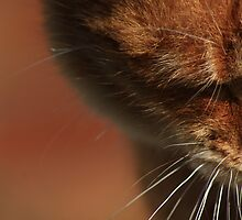 Close-up of ginger cat by turniptowers