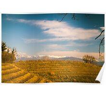 Vineyard in late winter Poster