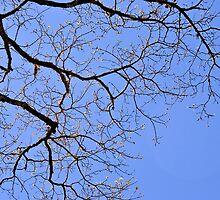 Carolina Spring In March by ©Dawne M. Dunton