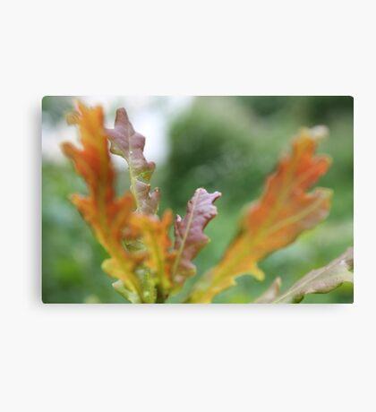 Orange Oak Leaves  Canvas Print