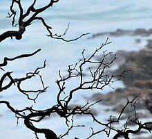 Zen Coastline by metriognome