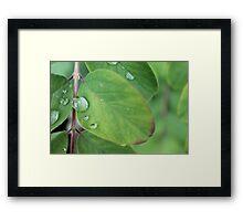 Water Droplet On Leaf Framed Print