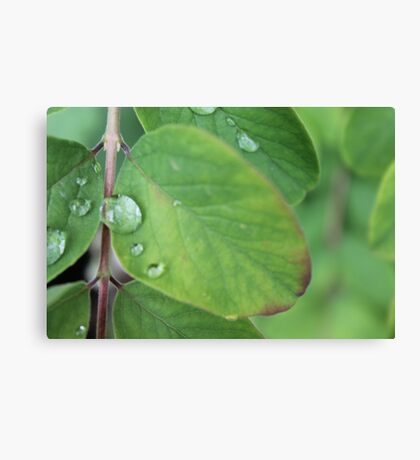 Water Droplet On Leaf Canvas Print
