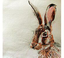 Daniel The Hare Photographic Print