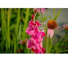 Gladiolus Flower Photographic Print