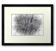 Sea Holly 2 Framed Print