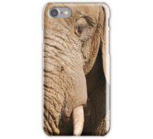 Double take (elephant again) iPhone Case/Skin