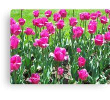 Cheerful Tulips Canvas Print