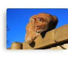 Ginger cat sat on garden fence Canvas Print