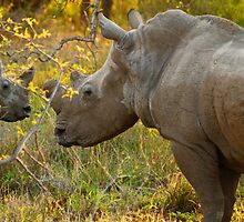 Mother and daughter by Explorations Africa Dan MacKenzie