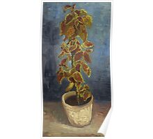 Vincent Van Gogh - Flame Nettle In A Flowerpot. Still life with flowers: blossom, nature, botanical, floral flora, wonderful flower, plants, cute plant for kitchen interior, garden, vase Poster