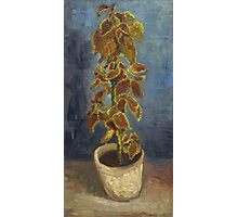 Vincent Van Gogh - Flame Nettle In A Flowerpot. Still life with flowers: blossom, nature, botanical, floral flora, wonderful flower, plants, cute plant for kitchen interior, garden, vase Photographic Print