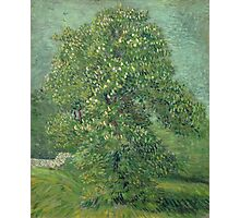 Vincent Van Gogh - Horse Chestnut Tree In Blossom. Forest view: forest , trees,  fauna, nature, birds, animals, flora, flowers, plants, field, weekend Photographic Print