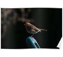 Robin on spade handle Poster