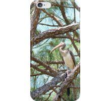 Florida Jungle iPhone Case/Skin