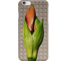 Orangery Red Amaryllis Bud iPhone Case/Skin