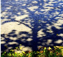 Shadow of a Tree by kfisi