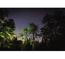 Quiet night in a pine forest Photographic Print
