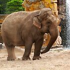 Beautiful Elephant  by hootonles