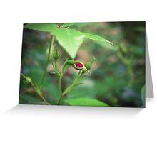 Botany Greeting Card