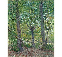 Vincent Van Gogh - Trees. Forest view: forest , trees,  fauna, nature, birds, animals, flora, flowers, plants, field, weekend Photographic Print