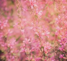 Pink Flowers by Frank Bramkamp