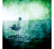 See the Seagull Photographic Print