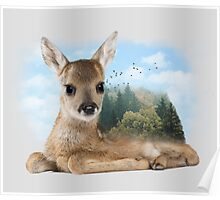 Baby Roe Deer Poster