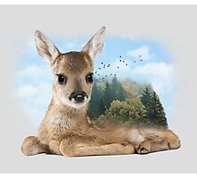 Baby Roe Deer Photographic Print