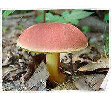 Stout Mushroom Poster