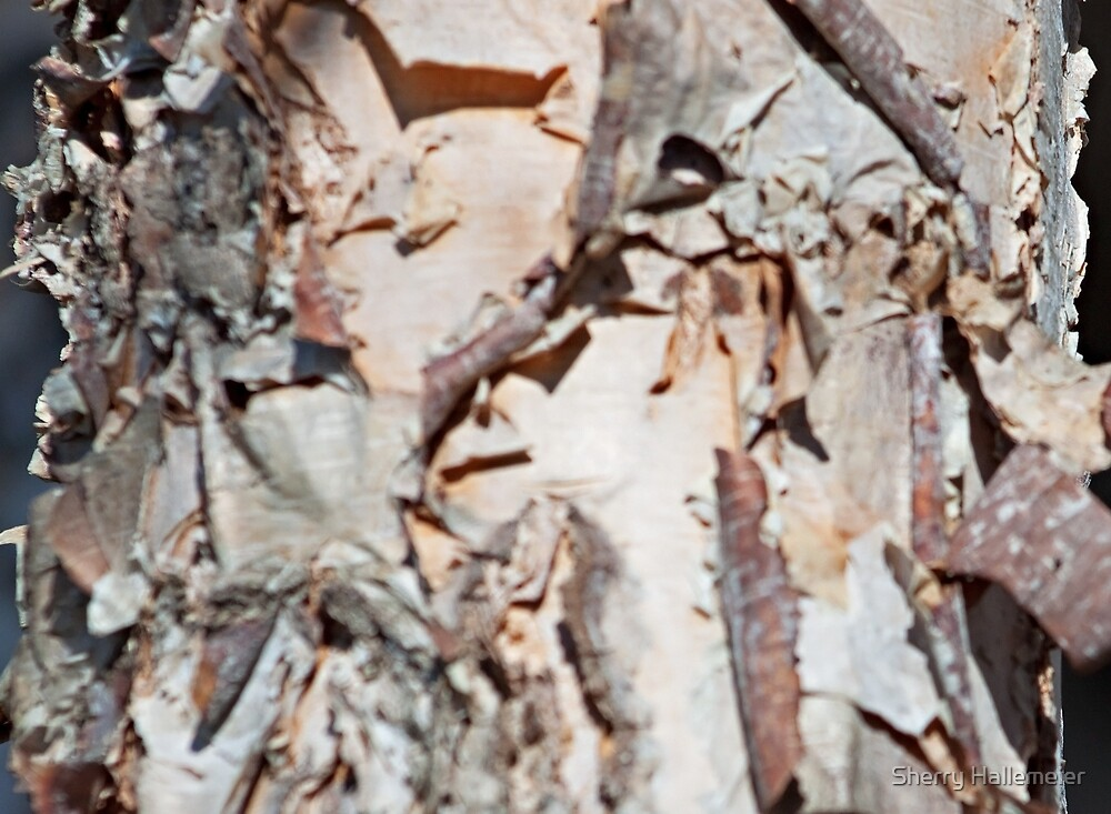 The Details of a Birch Tree by Sherry Hallemeier