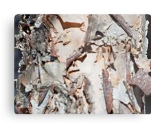 The Details of a Birch Tree Metal Print