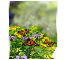Inside the Butterfly House Poster