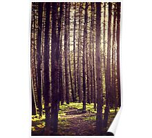 Path to the Trees Poster