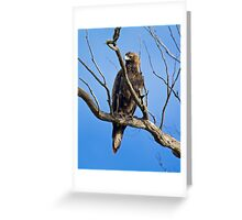 RAPTOR ~ Wedge-tailed Eagle by David Irwin Greeting Card