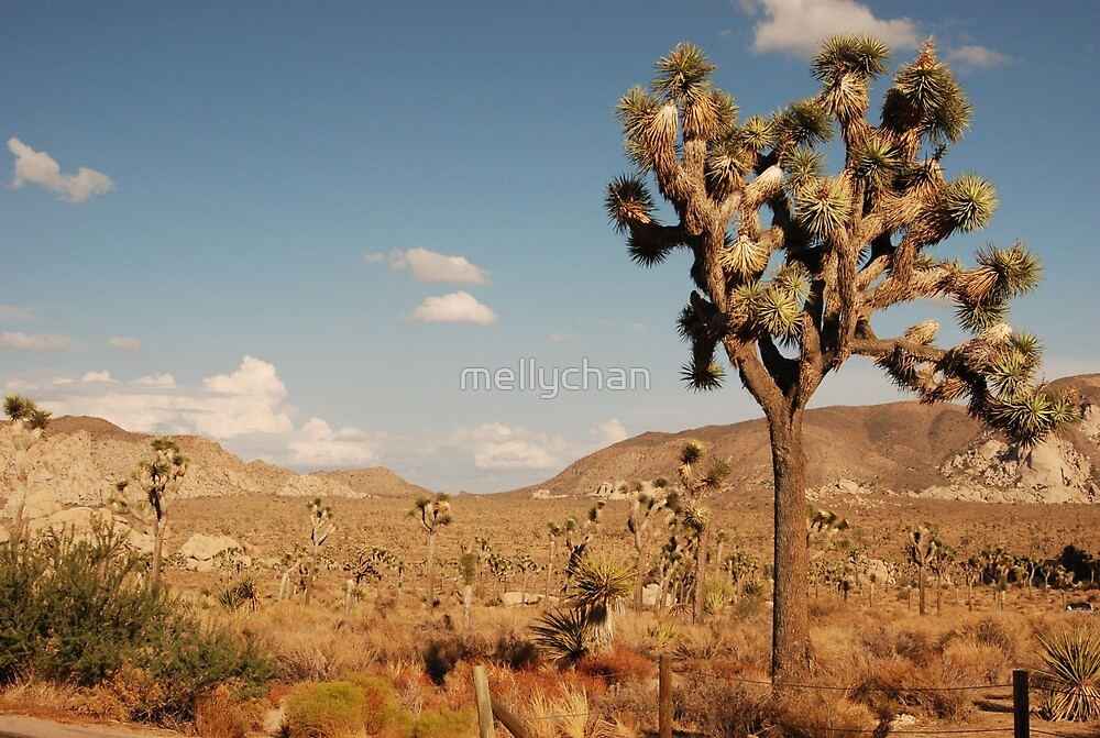the joshua tree by mellychan
